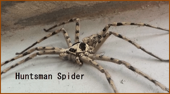 World's Largest Spiders - HalloweenEventsUSA.com