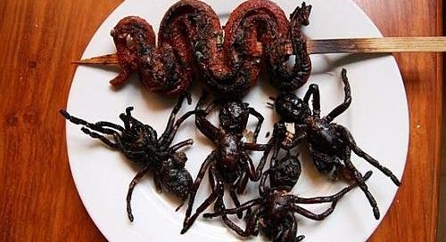 Tarantula Food Dish