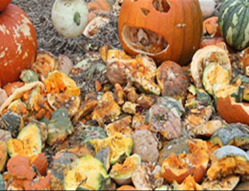 Smashing Halloween Pumpkins