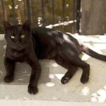 Black Cat on a Porch