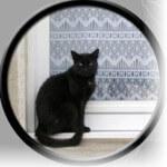 Black Cat by a window