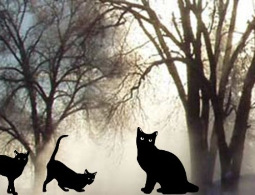 Mysterious Cats