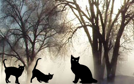 Black Cats and Trees